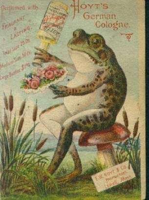 hoytfrog.jpg