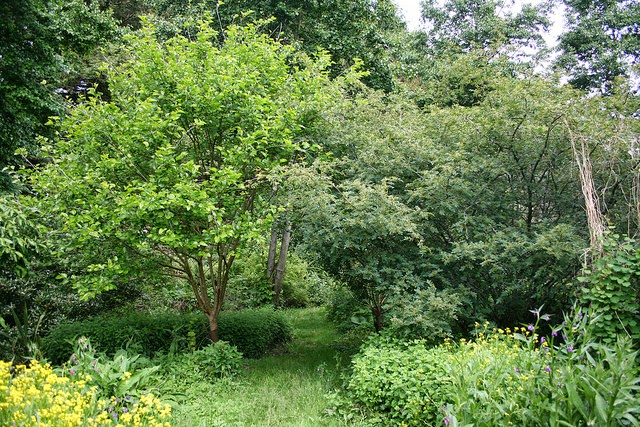 dal Forest Garden di Martin Crawford uno scorcio di sentiero tra un Morus alba e un Zanthoxylum simulans