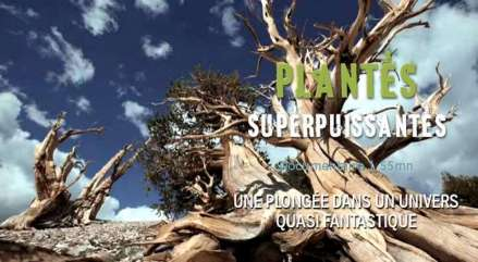 1000x550_video-plantes-superpuissantes_pf