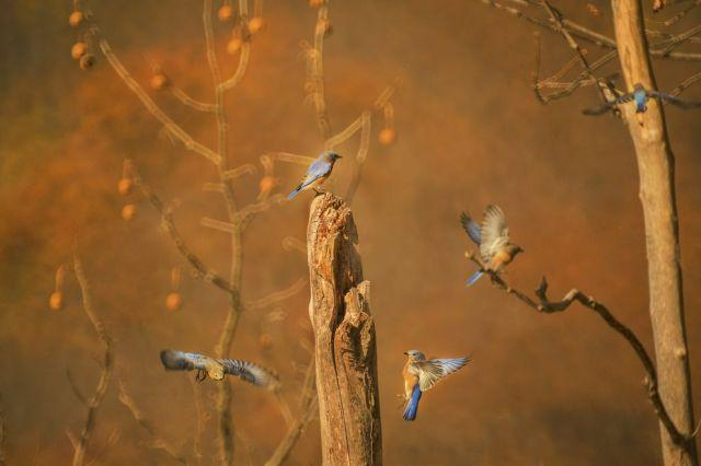 living_forest_birds_tree.jpg.990x0_q80_crop-smart.jpg