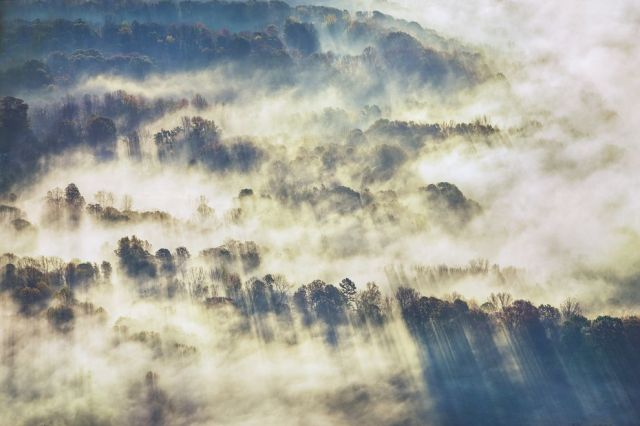 living_forest_clouds_rays_trees.jpg.990x0_q80_crop-smart